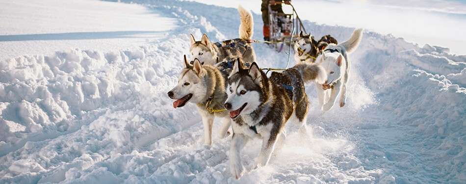 Lapland Kuzey Işıkları