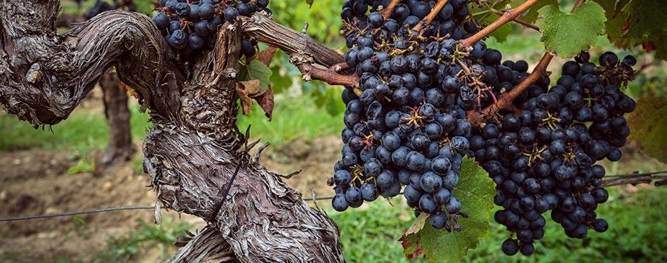 şarap tadım turları