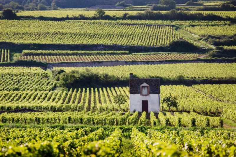 TASTING AND GASTRONOMY OF THE REGION BURGUNDY TYPE OF